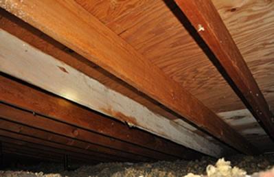 mold_plywood